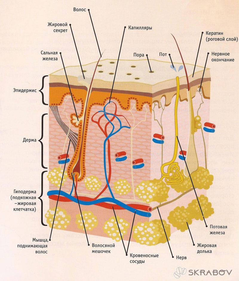 Причины черных точек на носу и методы борьбы с ними 9-4